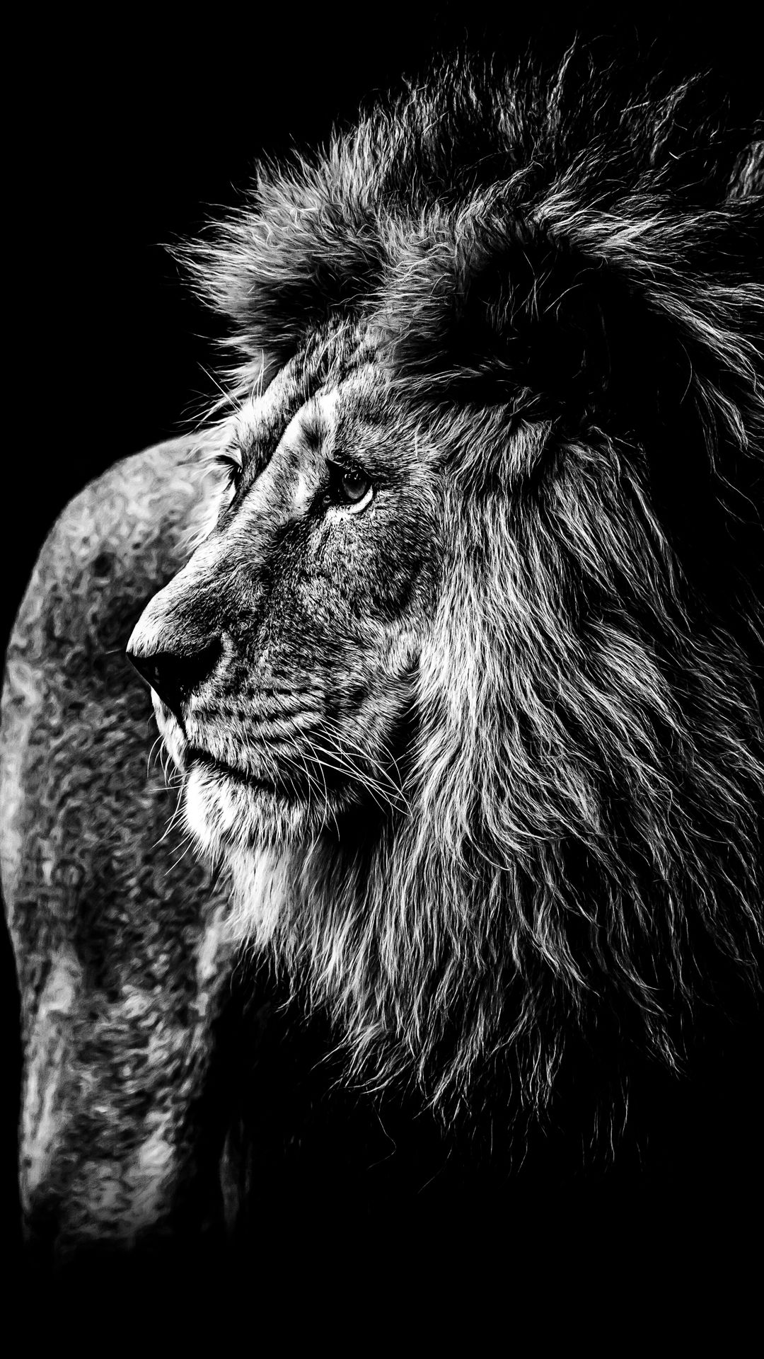 Wallpapers Lion Wallpapersanimal Animals With Images Beast
