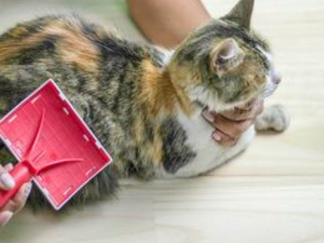 How To Get Rid Of Fleas From Cats With A Natural Home Remedy Cat Fleas Home Remedies For Fleas Fleas On Kittens