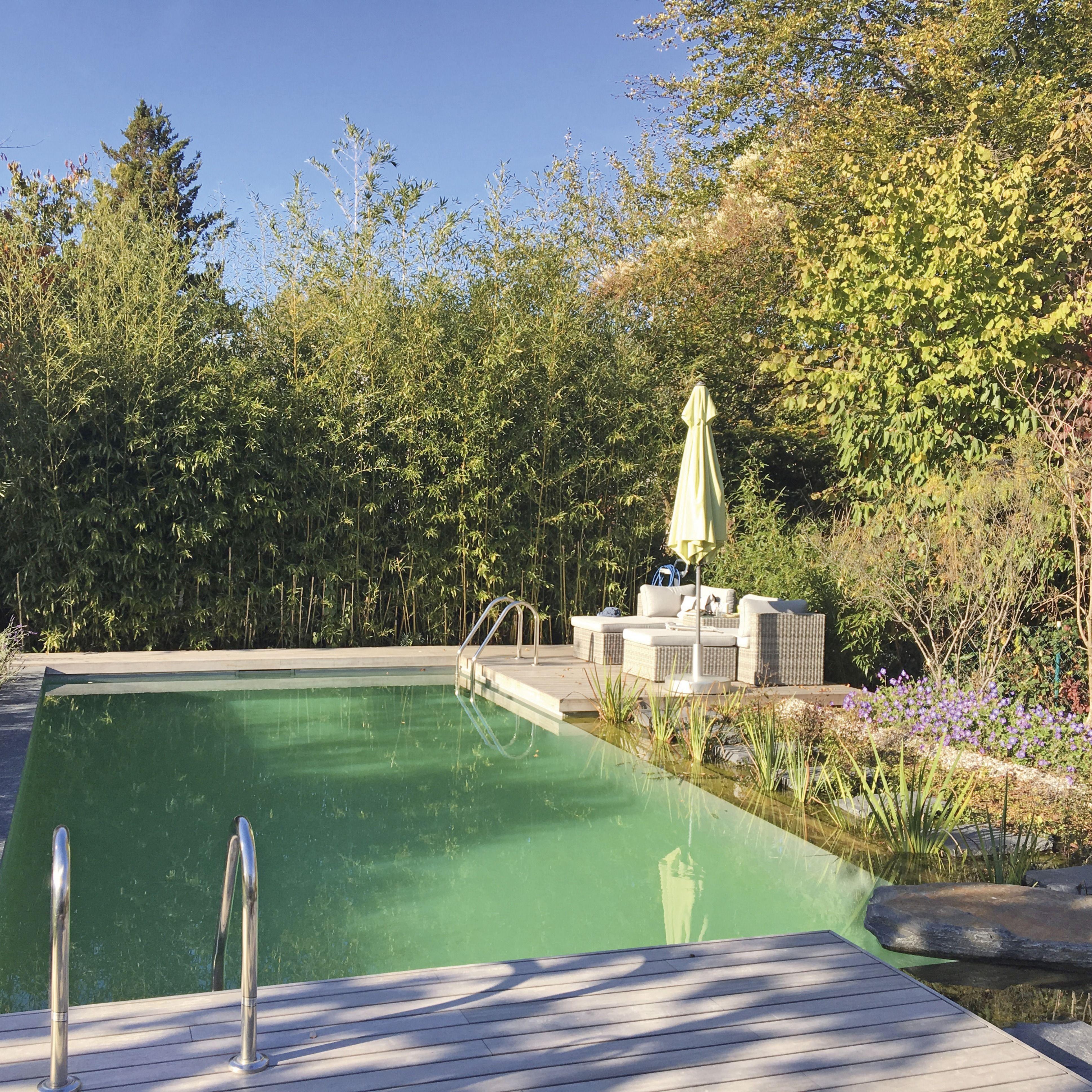 Naturpool Schwimmteich Natur Pool Gartengestaltung