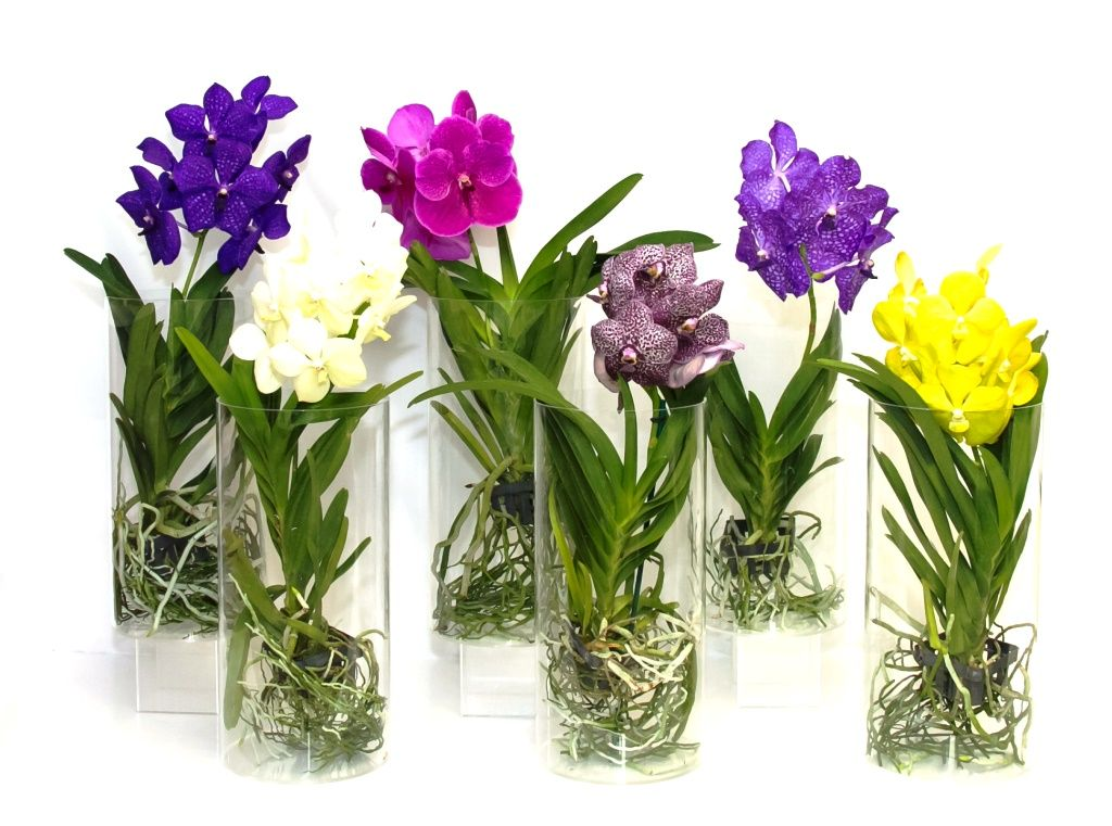 how to grow orchids in a glass vase