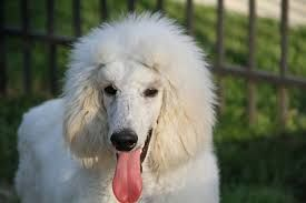 Image result for beautiful dogs