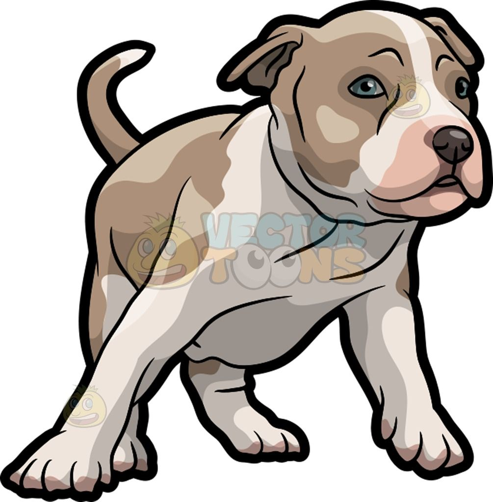 A Playful American Staffordshire Terrier Puppy American