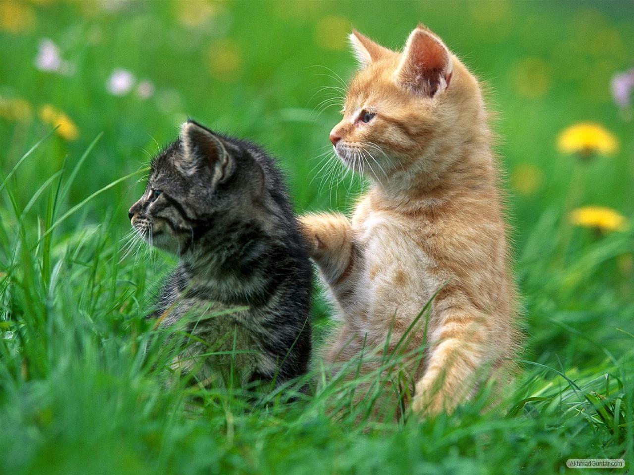 Kucing Imut Wallpaper