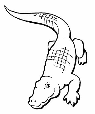 Printable Crocodile Coloring Pages Animal templates Pinterest - new alligator coloring pages to print