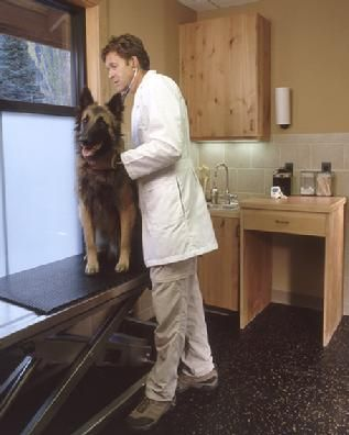 All Dogs & Cats Veterinary Hospital, Glenwood Springs