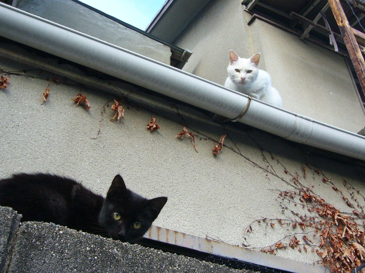 西宮流 にしのみやスタイル Calico Cat Cat Party Dog Cat