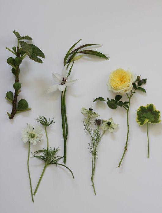 Blooms in Season   By Natalie Bowen for Sacramento Street