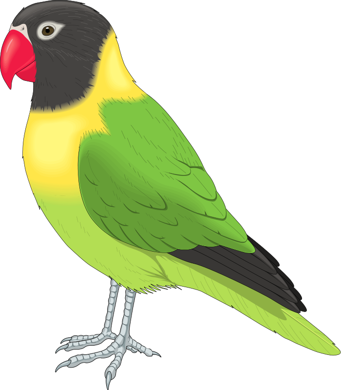 Bird Clipart Bird Animal Clipart Pictures Royalty Free