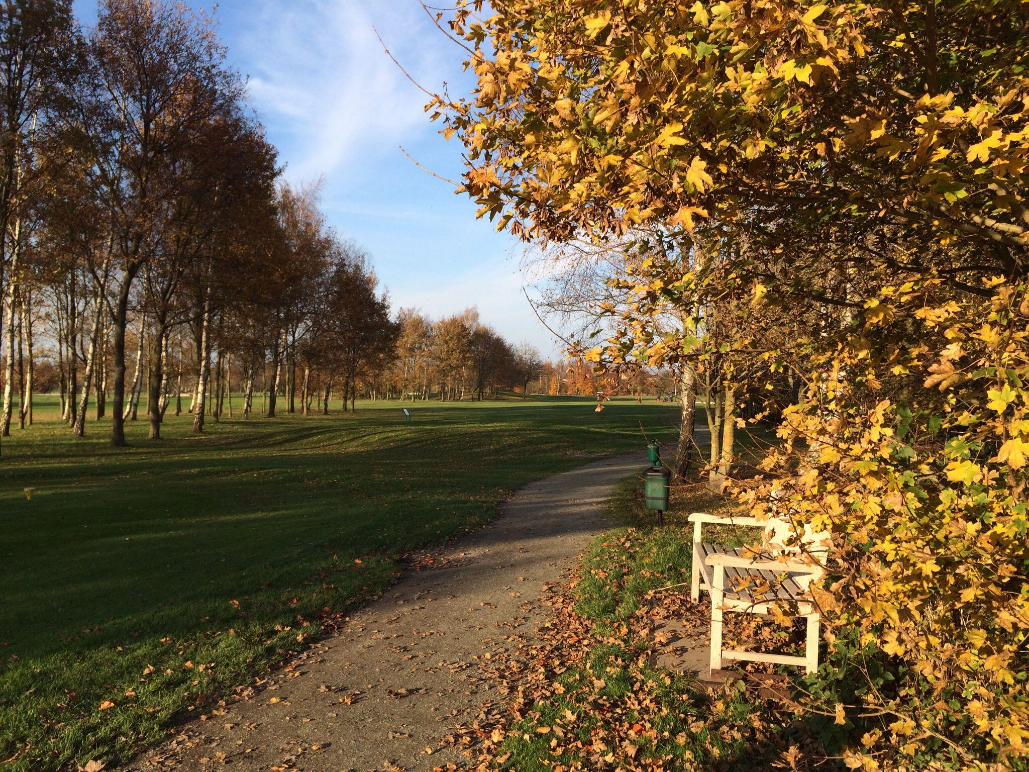 Beukenbomen geven schitterende kleuren op de 18 holes golfbaan in Lelystad. #fransloos #lelystad