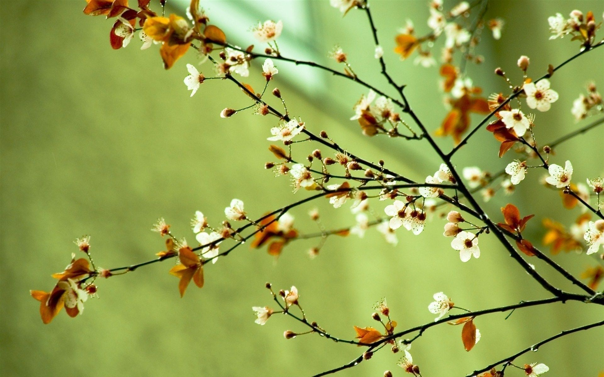 Spring Free Computer Wallpaper Ololoshenka Pinterest Spring