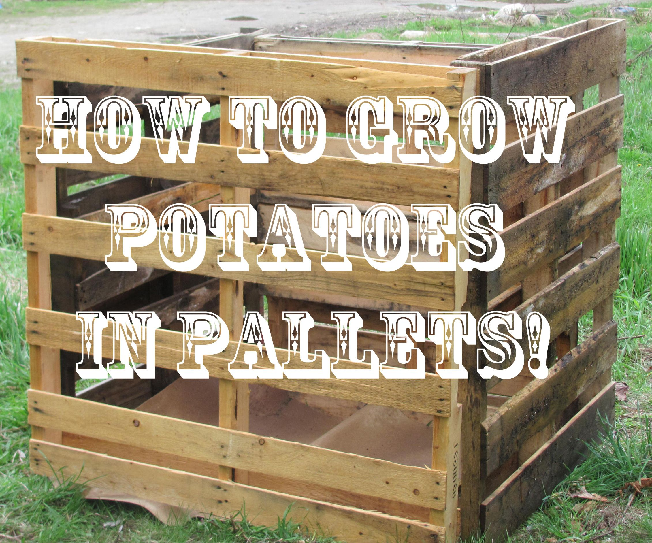 Wooden transport pallets have become increasingly popular for diy - Diy Potato Container With Re Purposed Pallets
