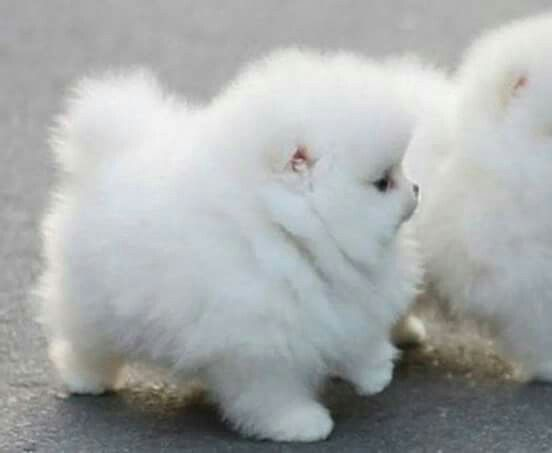Lol It's like a cloud with four legs.