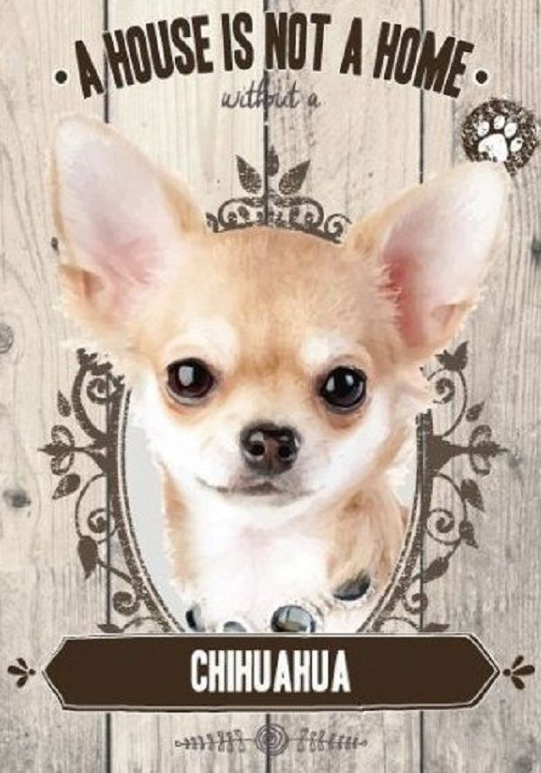 Chihuahua A House Is Not A Home Chihuahua, Dog signs, Dogs