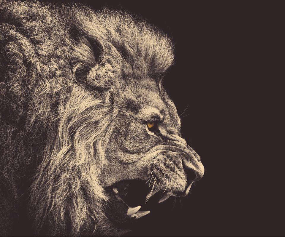 vintage fierce lion animals
