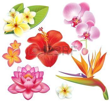 Dibujos Flores Conjunto De Flores Tropicales Art En 2019
