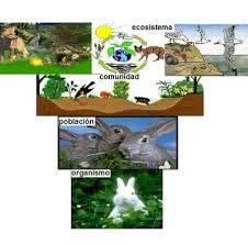 Resultado De Imagen Para Niveles De Organismo De La Materia Viva Dibujos Ccnn Character Family Guy