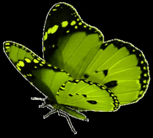 tubes butterflies