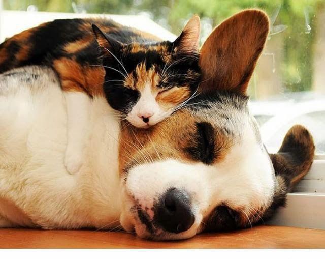 Colecho perro/gato