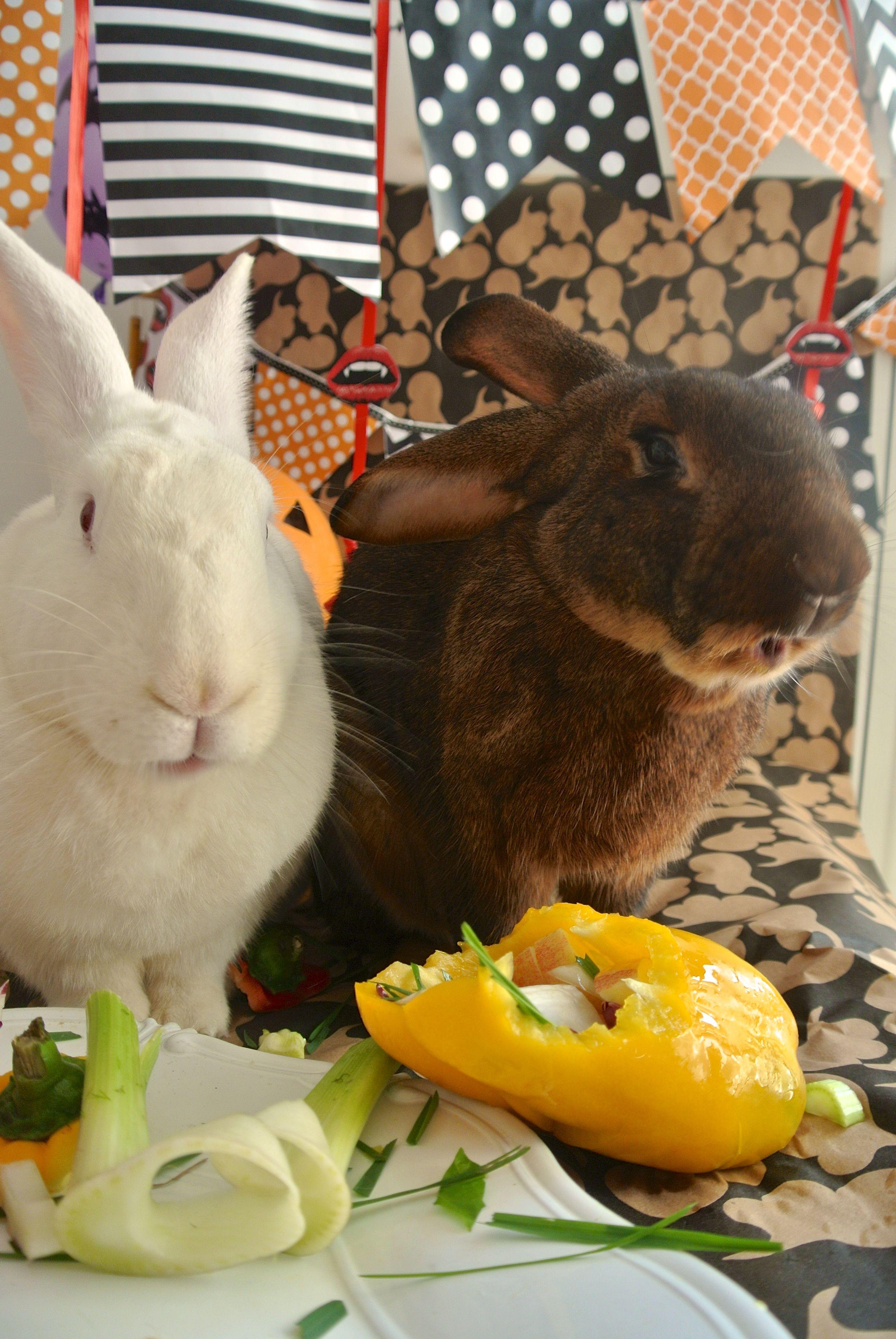 halloween recipe for bunnies