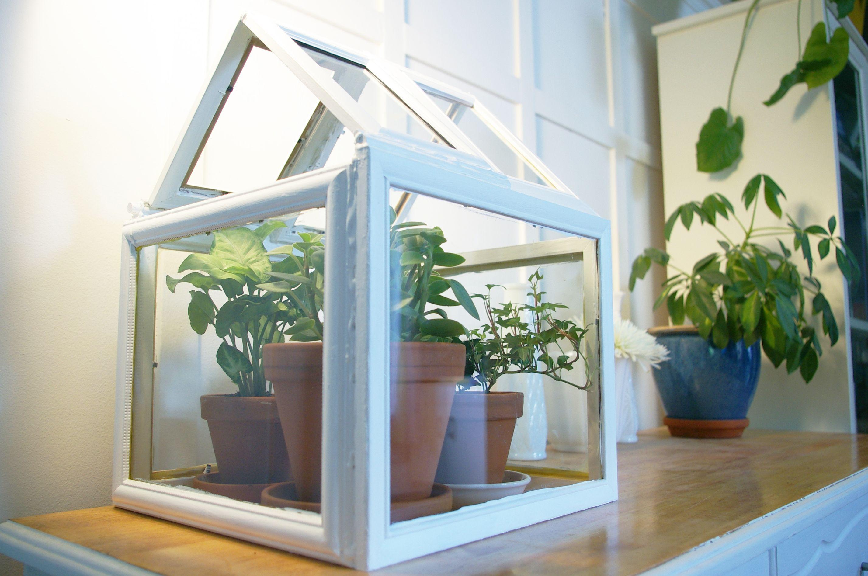 Mini Serre Diy Diy Small Greenhouse Serre Bricolage Petite Serre Deco Chambre