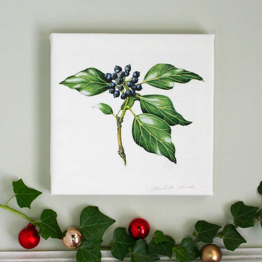 'ivy' canvas print by the botanical concept | notonthehighstreet.com