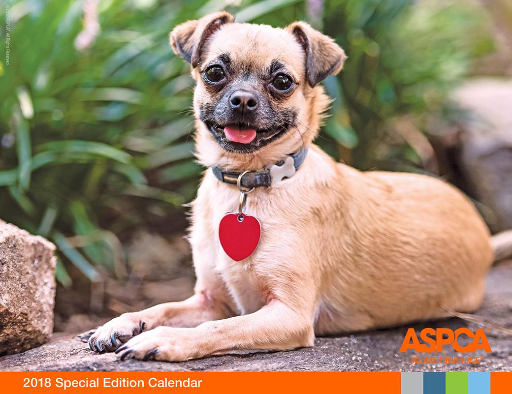 Announcing the 2018 ASPCA Calendar Cover Pet! Pets