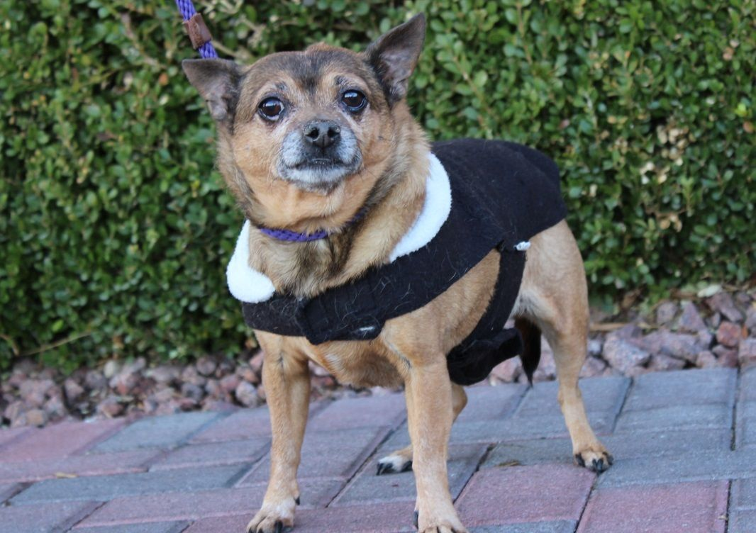 Adopt Megara On Dog Adoption Pet Adoption Homeless Pets