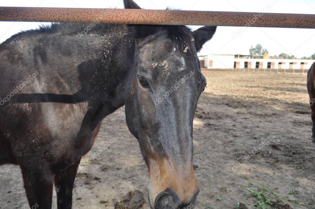 Beautiful Animal Horse Natural Environment Farm - Stock Photo ,