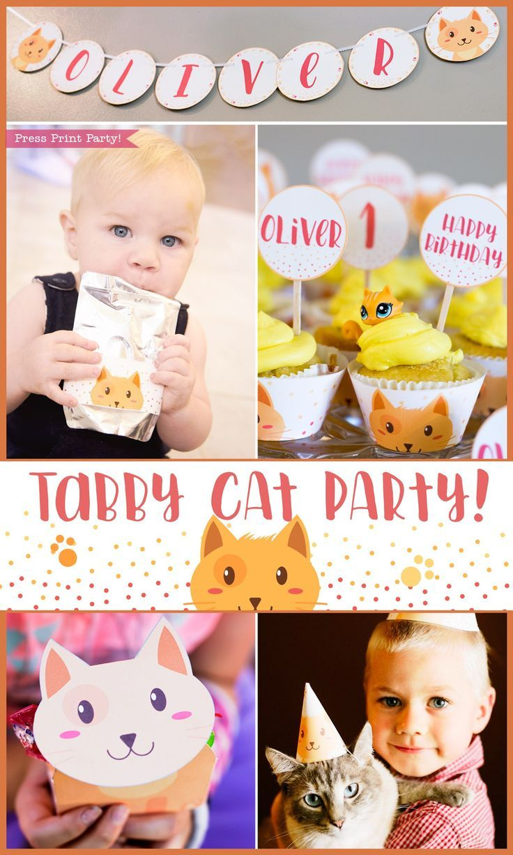 Olivers Adorable Tabby Cat Party