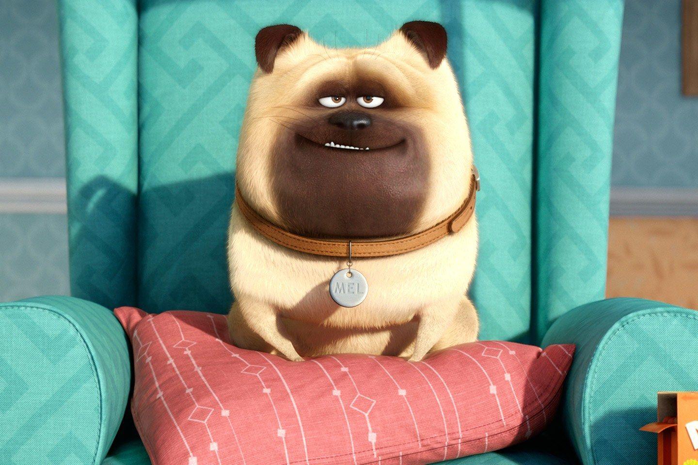 Huge Secret Life Of Pets Opening Shatters A Pixar Record Secret
