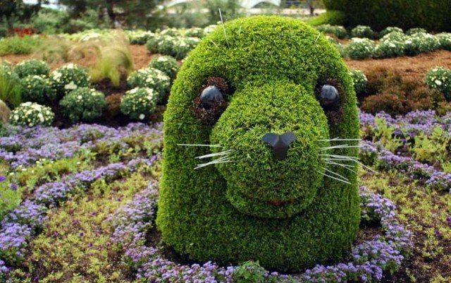 Gartenkunst Selbermachen Buchsbaum Tiere Seehund Garden Art