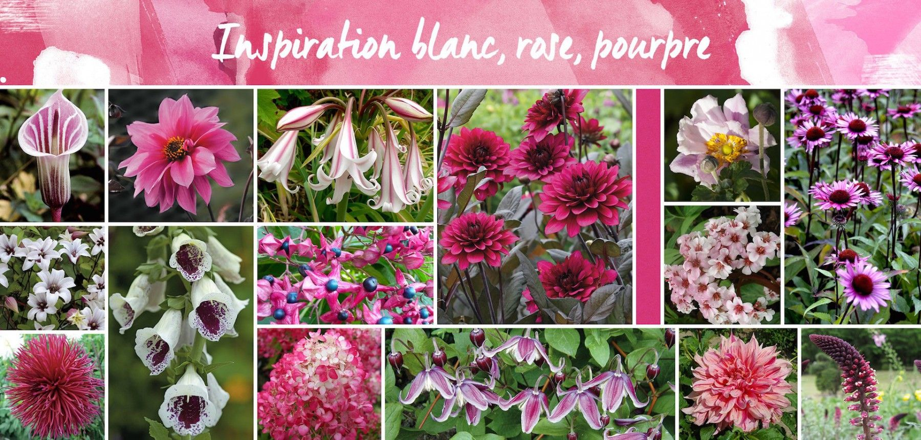 Inspiration Blanc Rose Pourpre Pinterest Plants