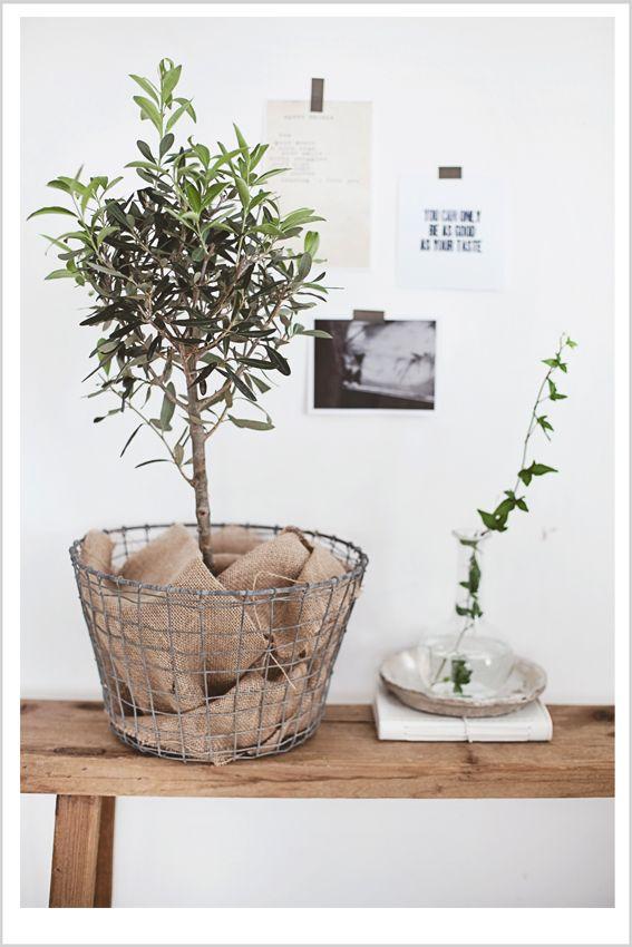Pin von sonja maria rettensteiner auf flora drahtkorb korb und deko - Zimmerpflanzen groay ...