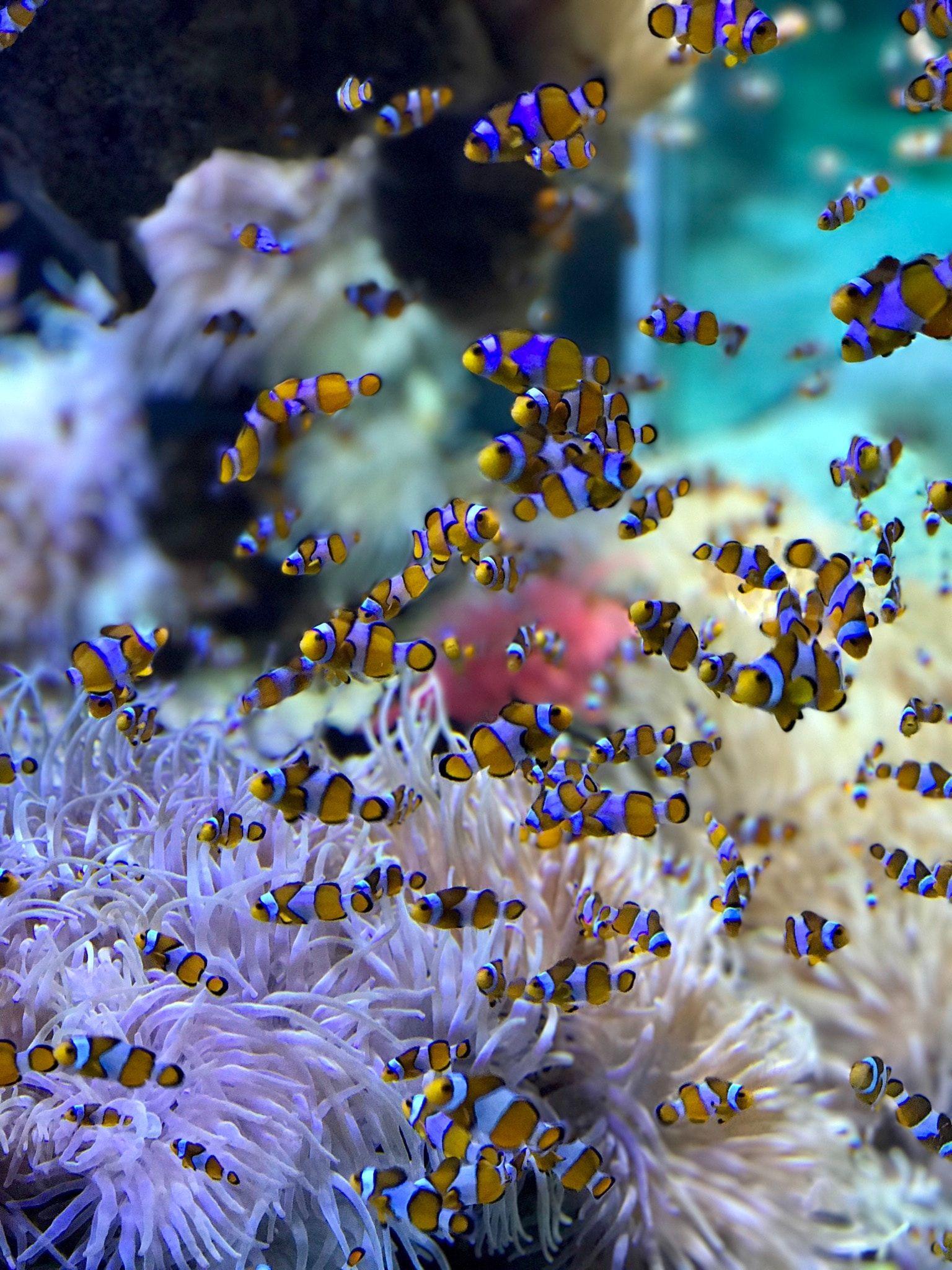 Visiter L Aquarium De La Rochelle Poisson Clown Illustration De Poisson Fond D Ecran Abstrait