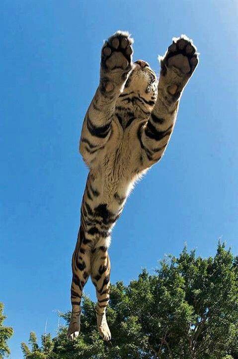 Fantastic Jump