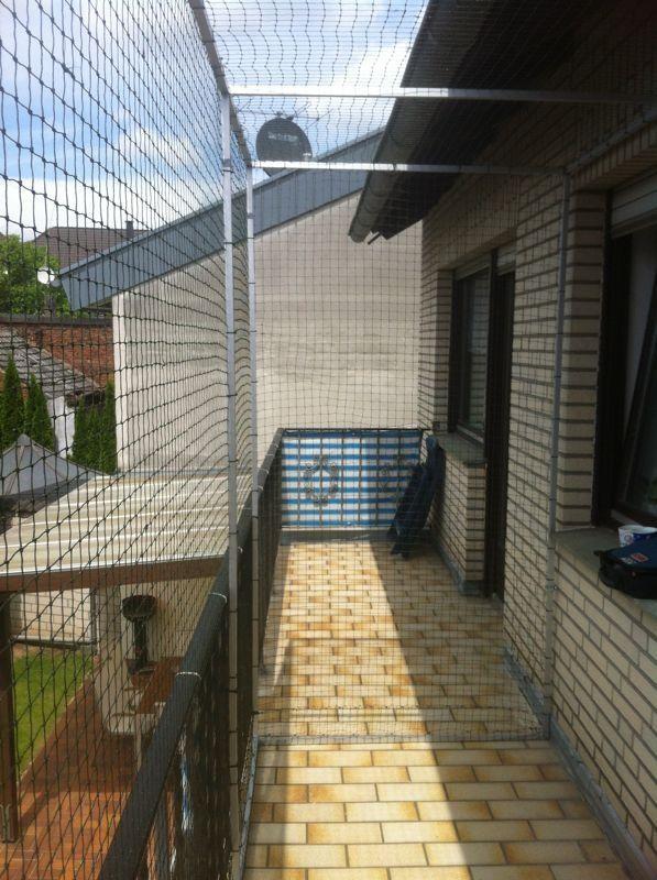 Pin Auf Katzen Balkon
