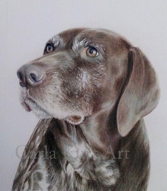 Hand Drawn Custom Pet Portrait  Colored Pencil Art By Carla Kurt Cat Dog Horse Memorial