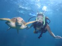 If I Won #TPbest, I'd go Diving on the Great Barrier Reef!