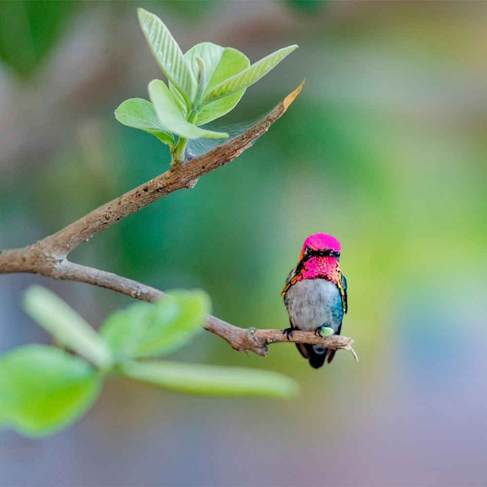 9 Expert Tips For Attracting Hummingbirds To Your Backyard