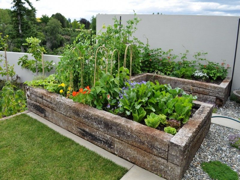 Amazing Amazing Small Home Vegetable Garden With Natural 400 x 300