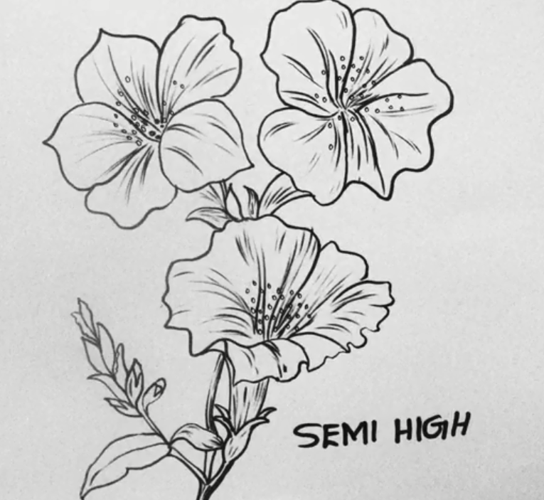 How To Draw Hibiscus Flower Draw China Rose Easy Drawing In 2020 Flower Drawing Hibiscus Flower Drawing Easy Drawings