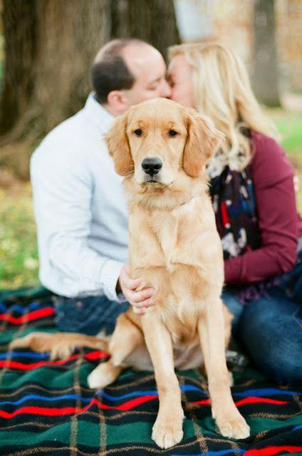 Golden Retriever Puppy Samantha Brooke Photography Bill