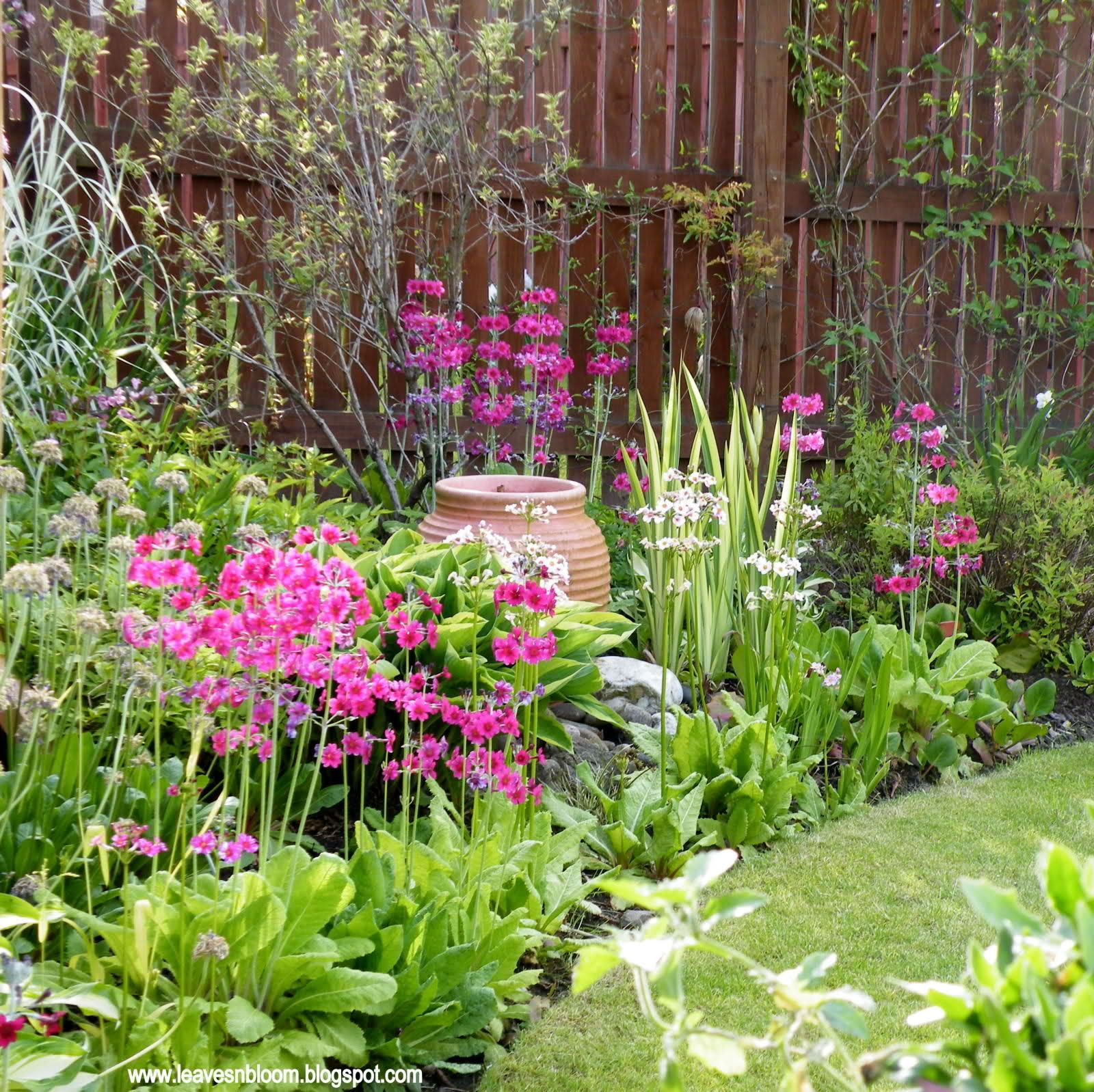 Plants for a north facing garden - Flowers Garden