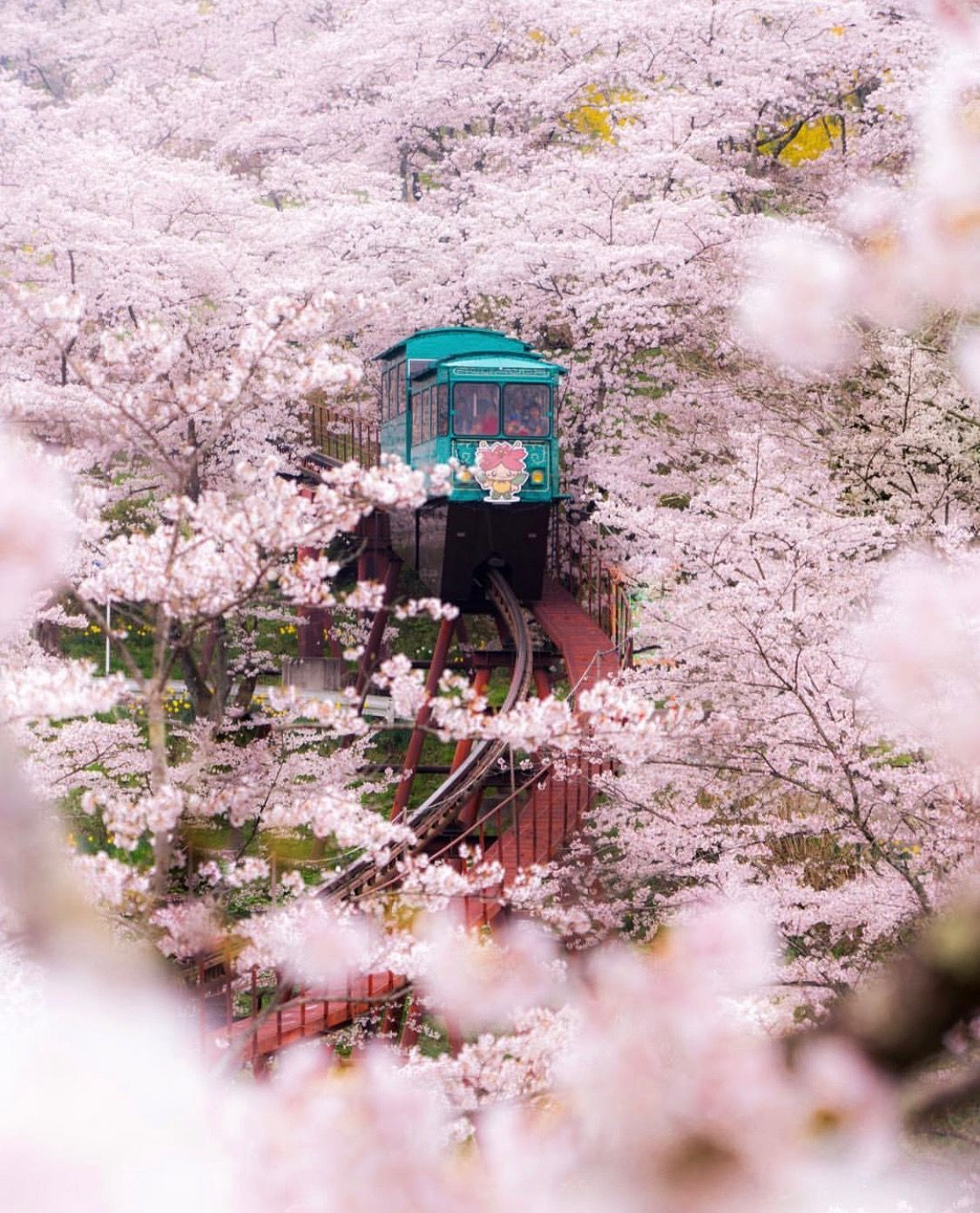 Pin By Britta On Photographyhd Cherry Blossom Japan Cherry Blossom Japan