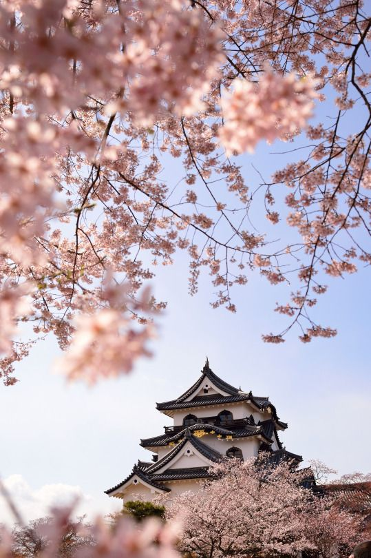 1512px Nature Photography Aesthetic Japan Nature