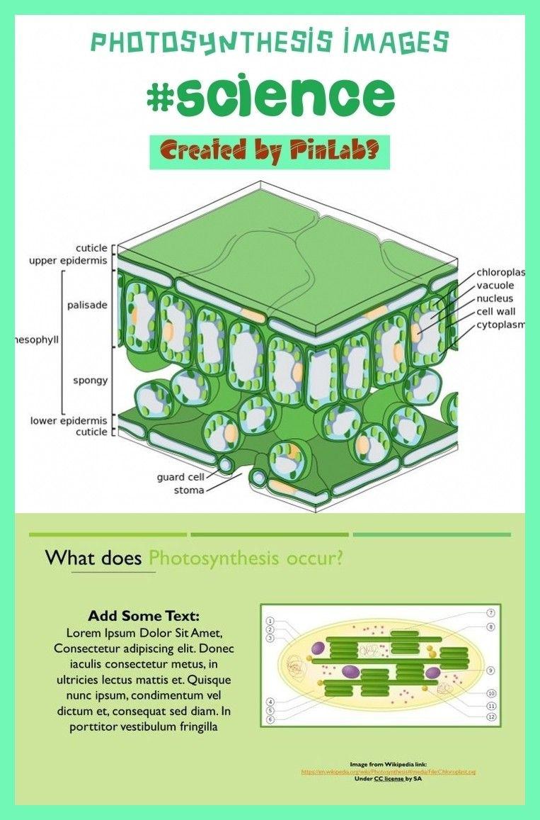 Photosynthesis images photosynthesis images
