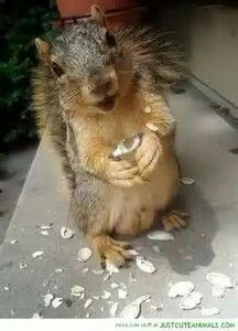 Cute Happy Squirrel