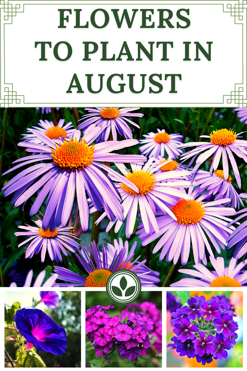 Flowers To Plant In August In 2020 Planting Flowers Plants Low Maintenance Plants