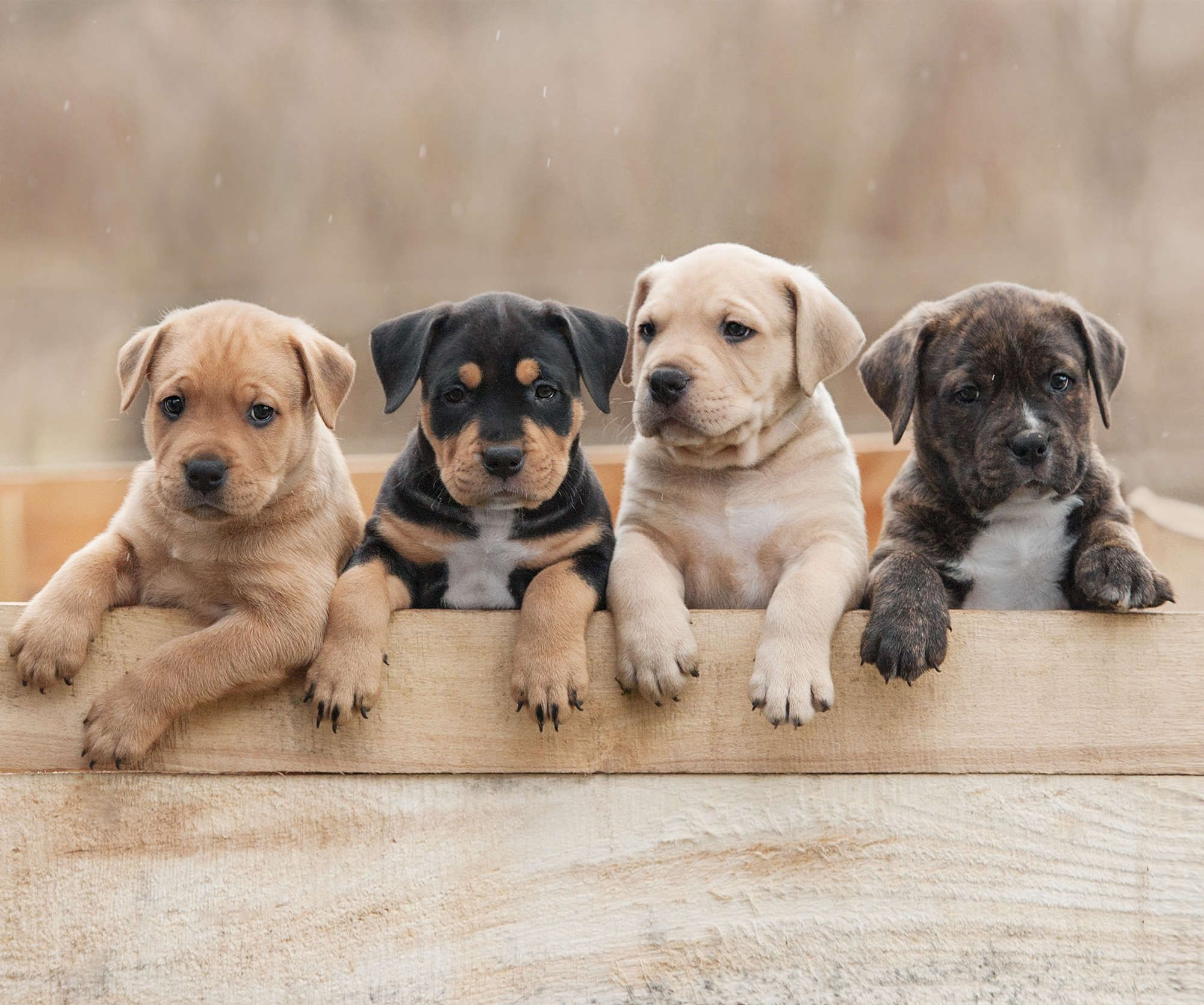 These Are The Most Popular Dog Names Of 2018 Popular Dog Names