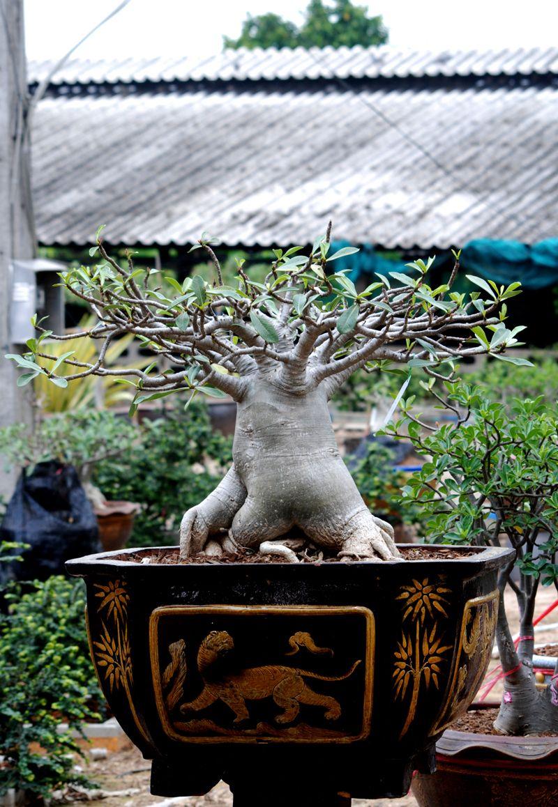 Image from http://3.bp.blogspot.com/-ZAY-M5ipKWw/T8Old2dKbKI/AAAAAAAABNI/RKsSeMff0DU/s1600/DSC_5925.JPG.